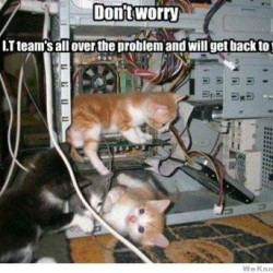 dont-worry-cat-it